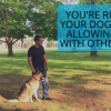 You're ruining your dog by not allowing play with other dogs