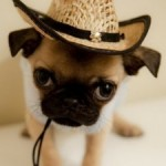 Pet Sitting vs. Kennel boarding – The Good, The Bad, and The Ugly