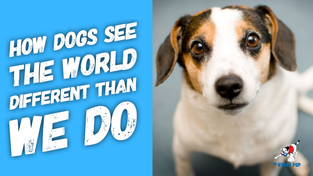 How Dogs See The World Different Than We Do.