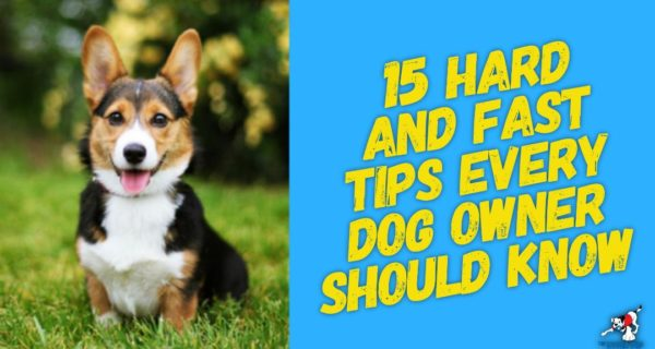 15 Hard And Fast Tips Every Dog Owner Should Know And Follow, But Most Don't.