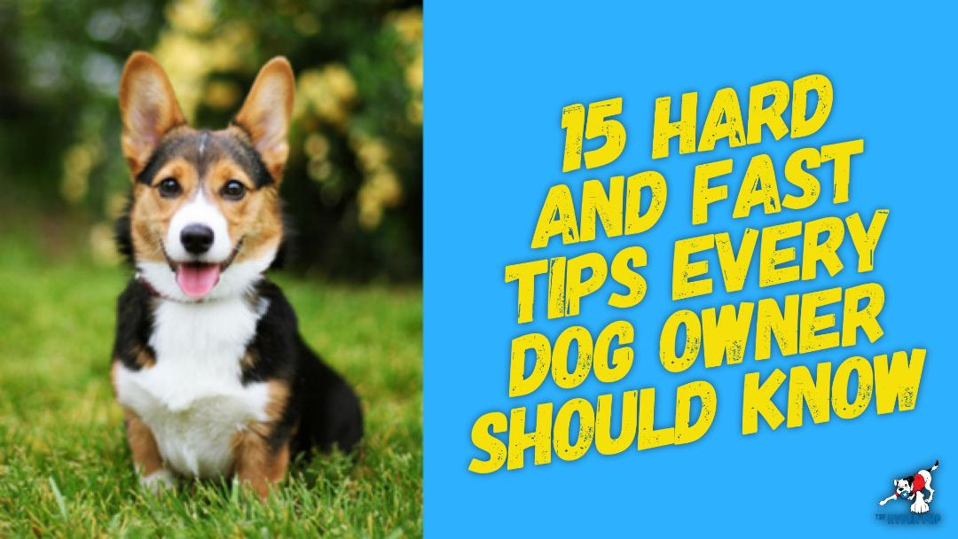 15 Hard And Fast Tips Every Dog Owner Should Know And Follow, But Most Don't. (Updated)