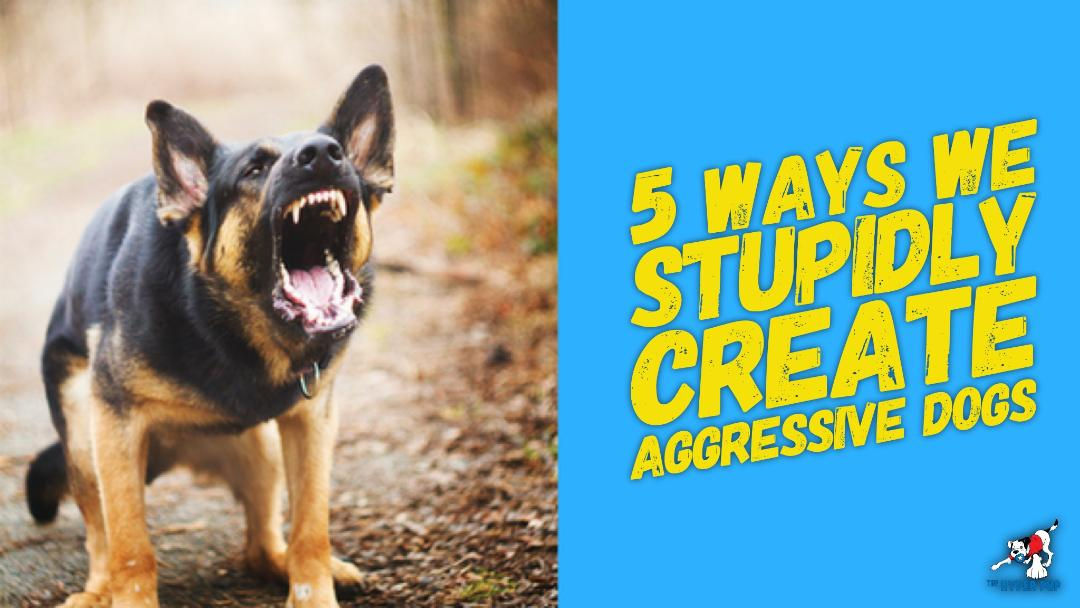 5 Ways We Stupidly Create Dog Aggression (Updated)