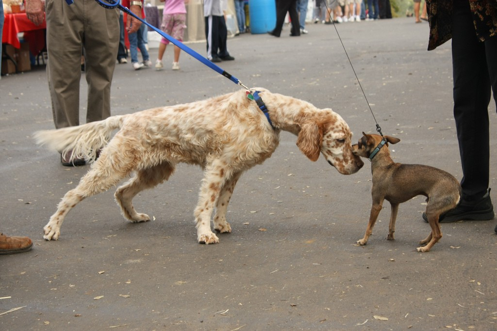 dogs meeting on-leash