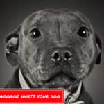 How your Dogs Behavior Problems mirror your own Emotional Hangups