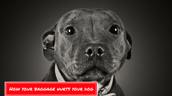 How Your Baggage Hurts Your Dog 11