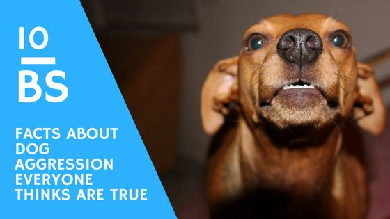 10 BS Facts About Dog Aggression (many People Think Are True)