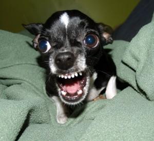 Dog Aggression