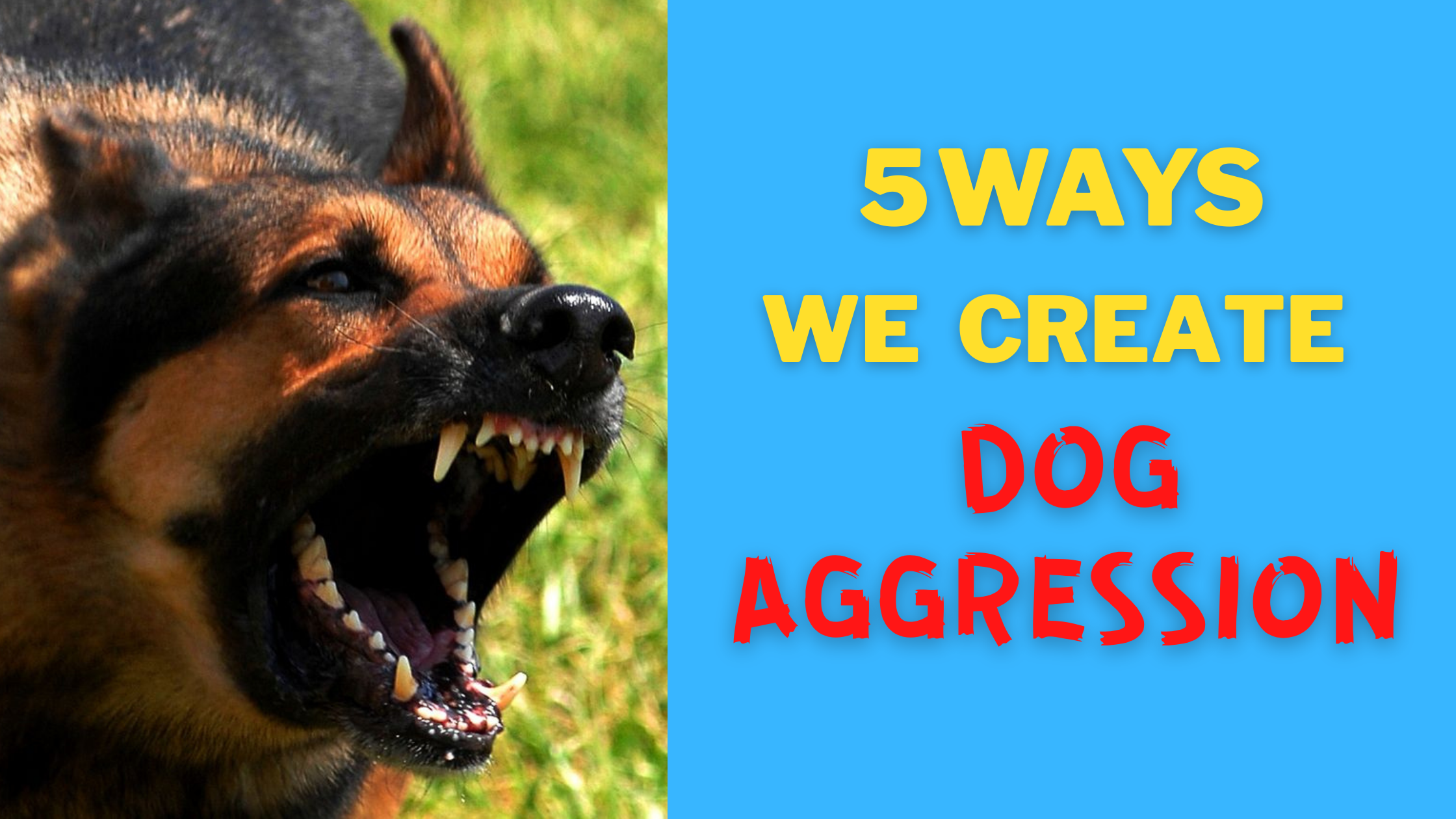 5 Ways We Unintentionally Create Dog Aggression (Updated)