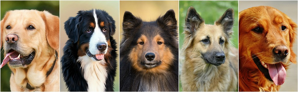 dogs-1501963_960_720