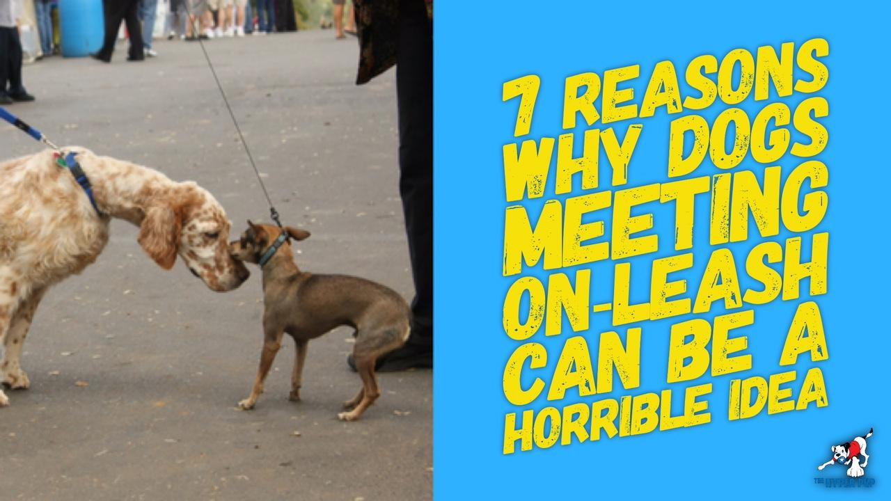 7 Reasons Why Dogs Meeting On-Leash Can Be A Horrible Idea