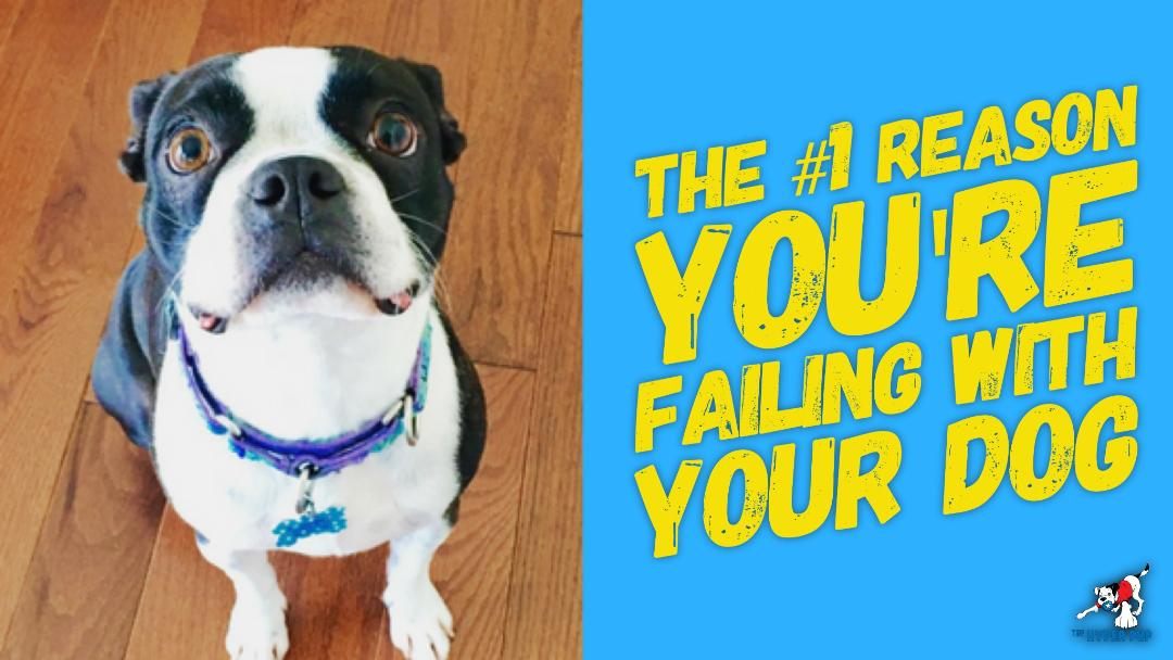 The #1 Reason You're Failing With Your Dog