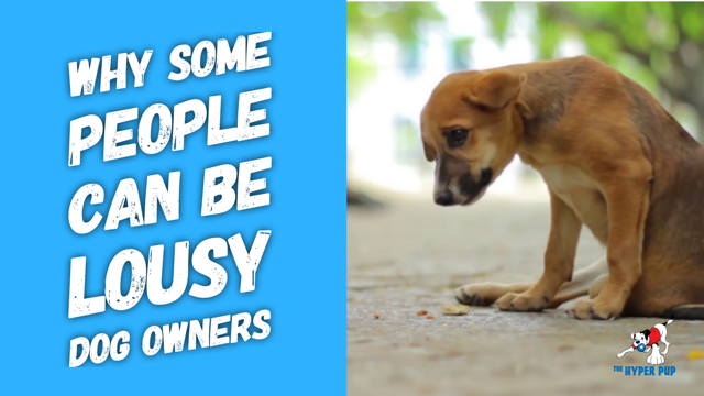 Why People Can Be Lousy Dog Owners