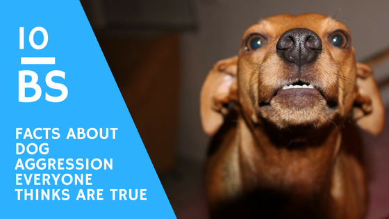 10 BS Facts about Dog Aggression