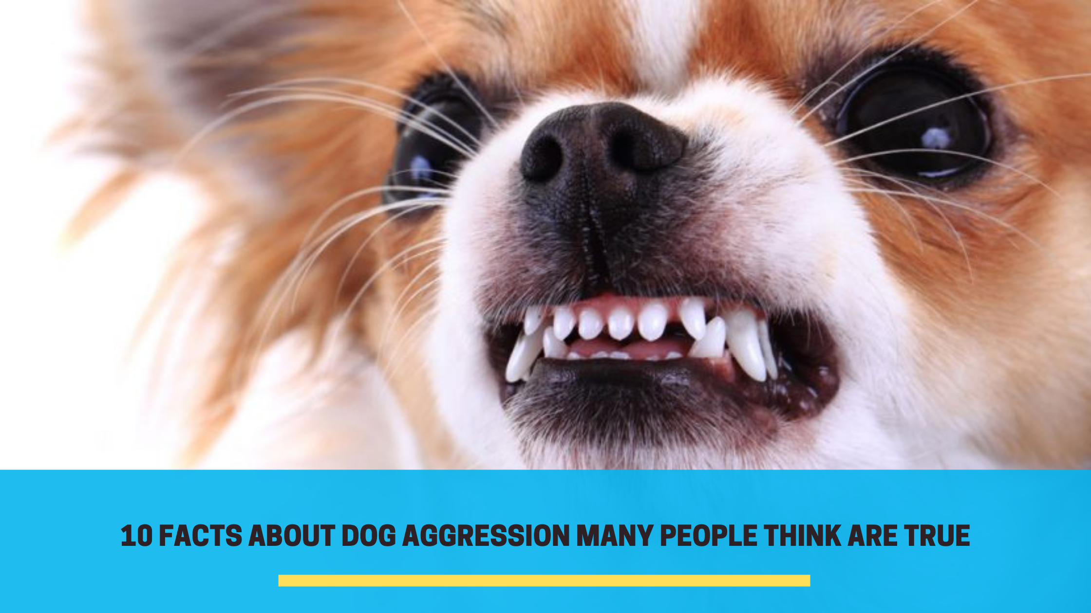 10 Facts About Dog Aggression Many People Think Are True
