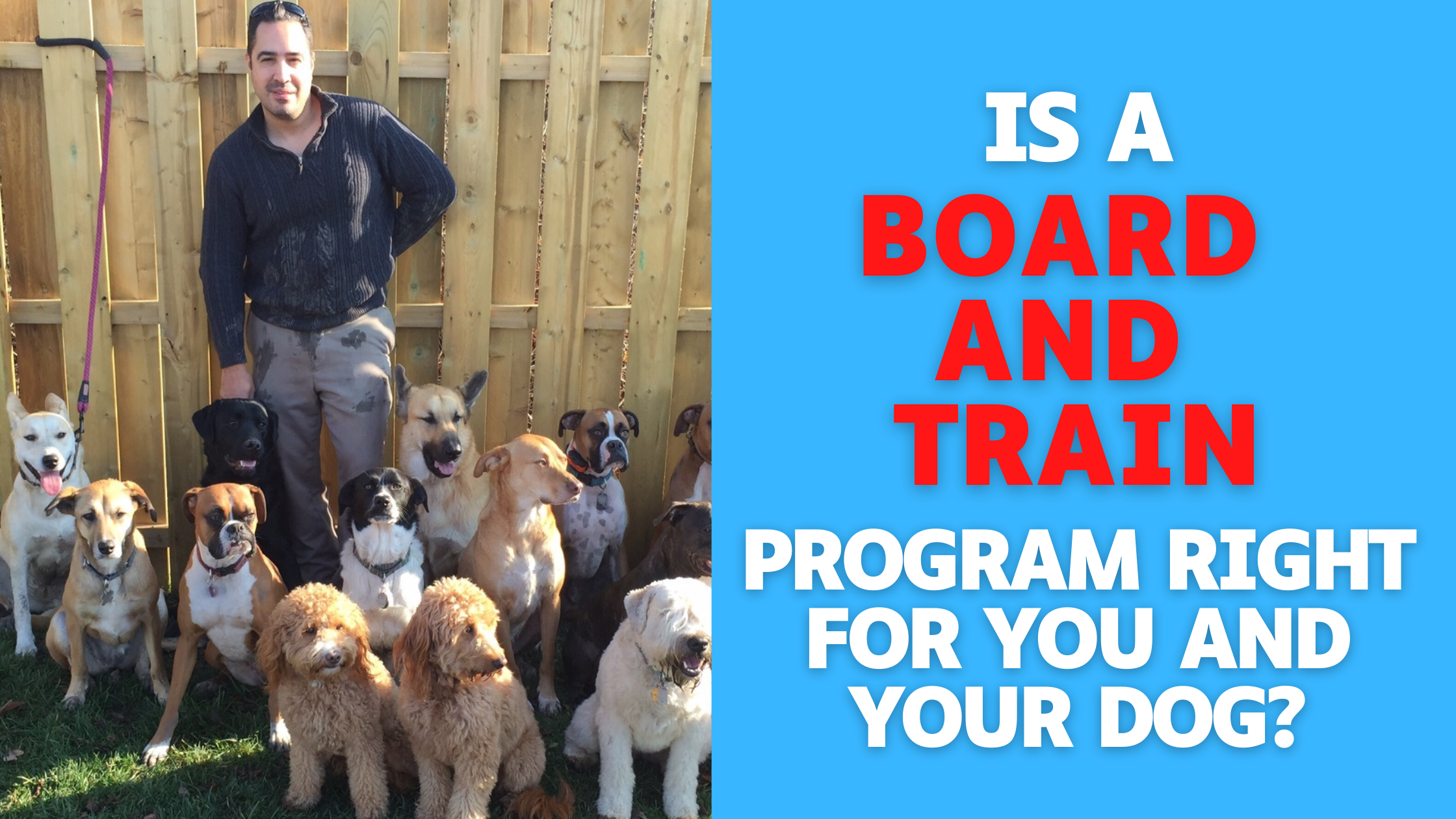 Is A Board And Train Program Right For You And Your Dog